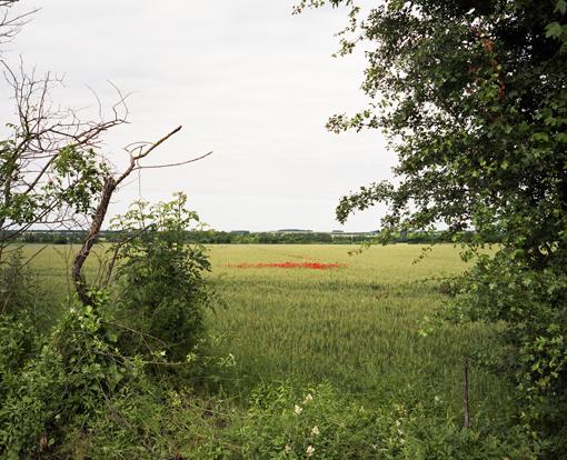 Entre Saint-Mard et Surgères, juin 2013 © Thierry Girard